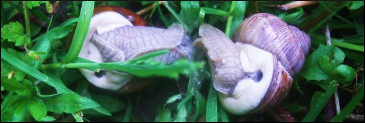 snail_xxx.jpg