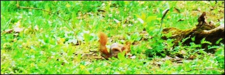 squirrel_med.jpg