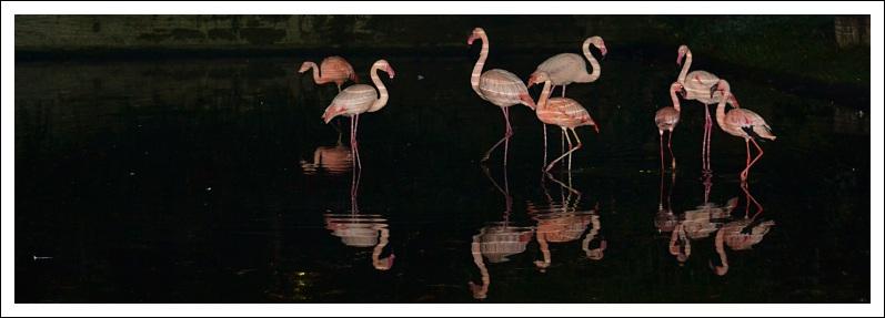Das Bild zeigt Flamingos in der Dunkelheit