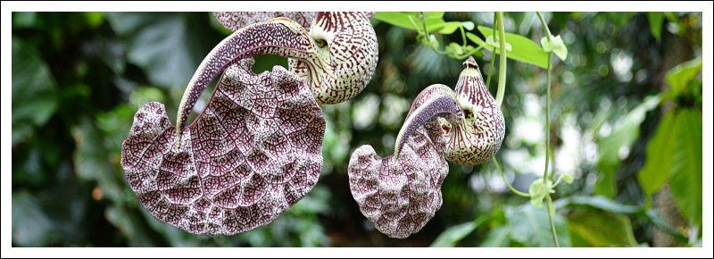 Das Bild zeigt eine Pflanze im Botanischen Garten
