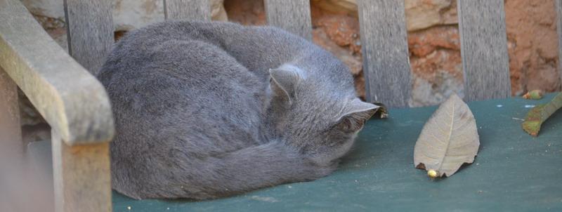 Das Bild zeigt eine Katze