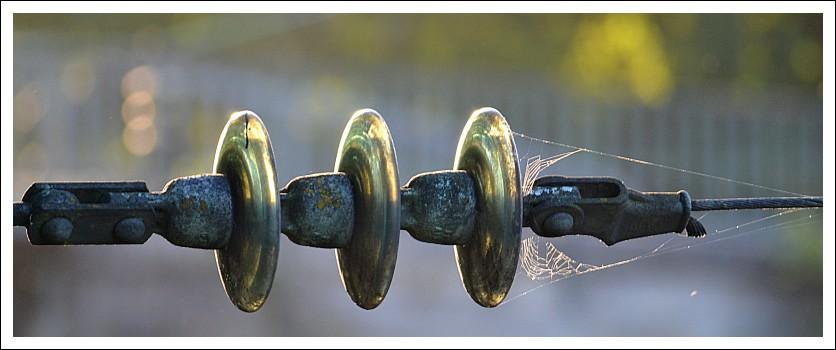 Das Bild zeigt einen Isolator mit Spinnennetz