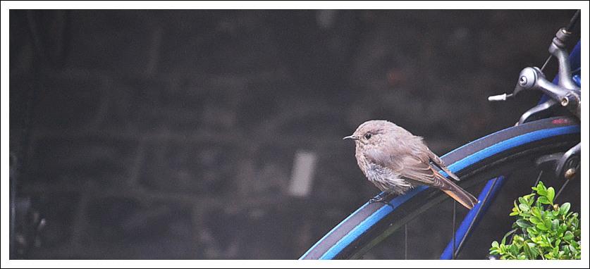 bird2bike